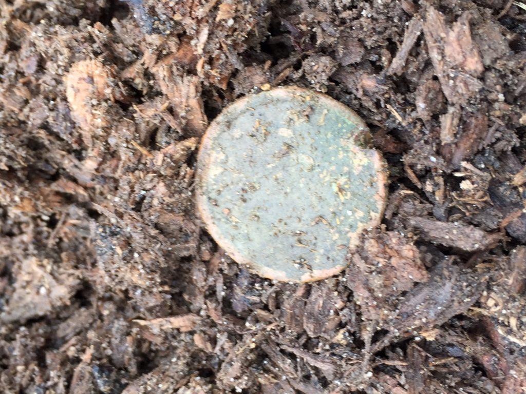 Large cent found early on the surface in Yarmouth- tree had been ripped out and this came up with it!
