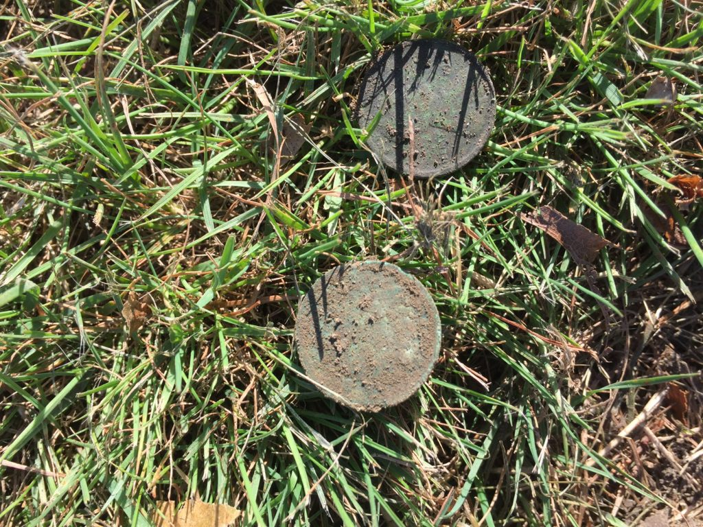 Old wheat and Indian Head penny spill, found in FR park.